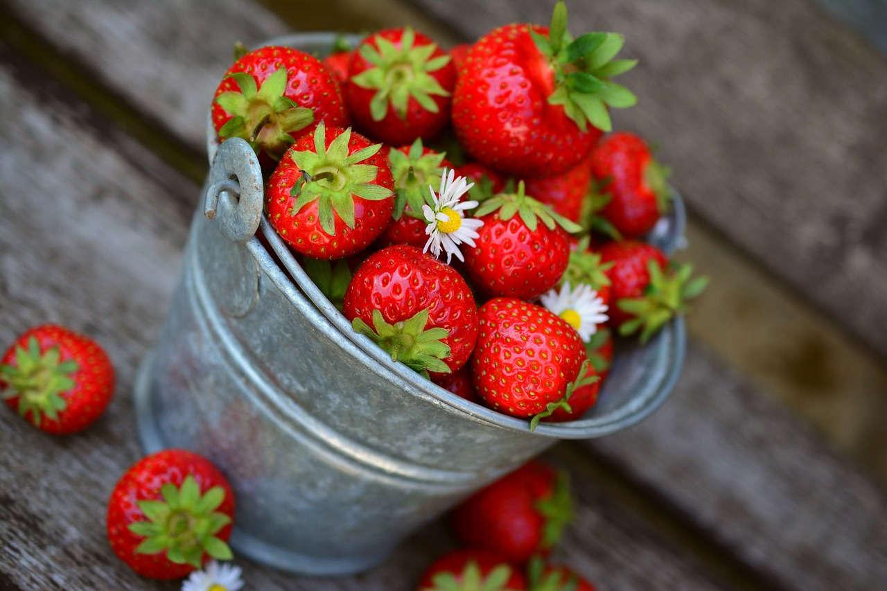 4 Tips Sukses Membudidayakan Strawberry di Tempat Panas