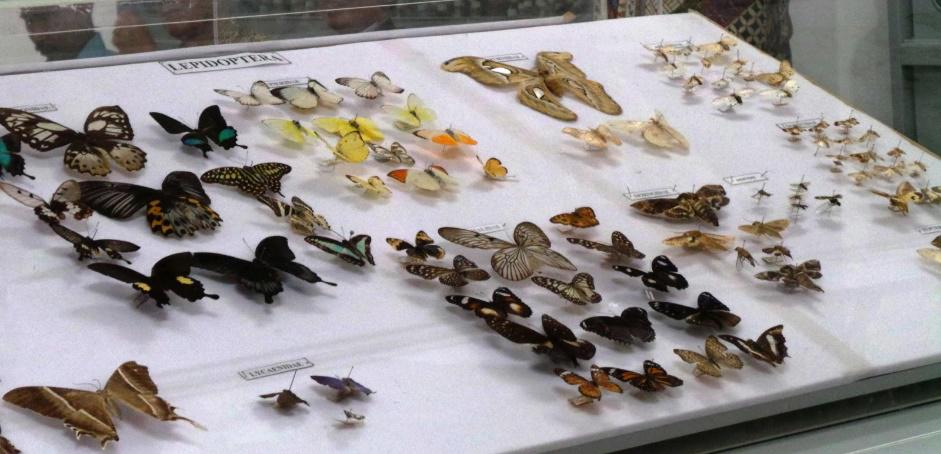 Museum Serangga Agroedutourism IPB