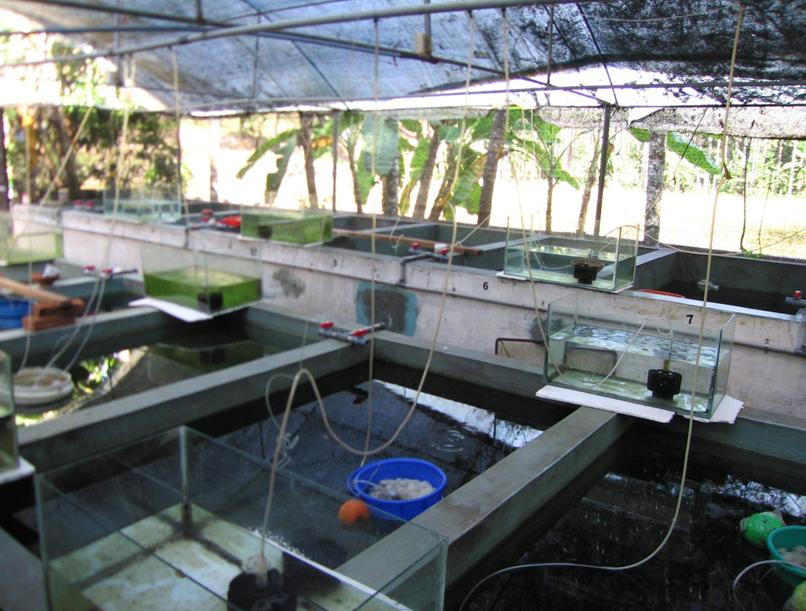 Lahan rumah dipakai sebagai tempat budidaya ikan