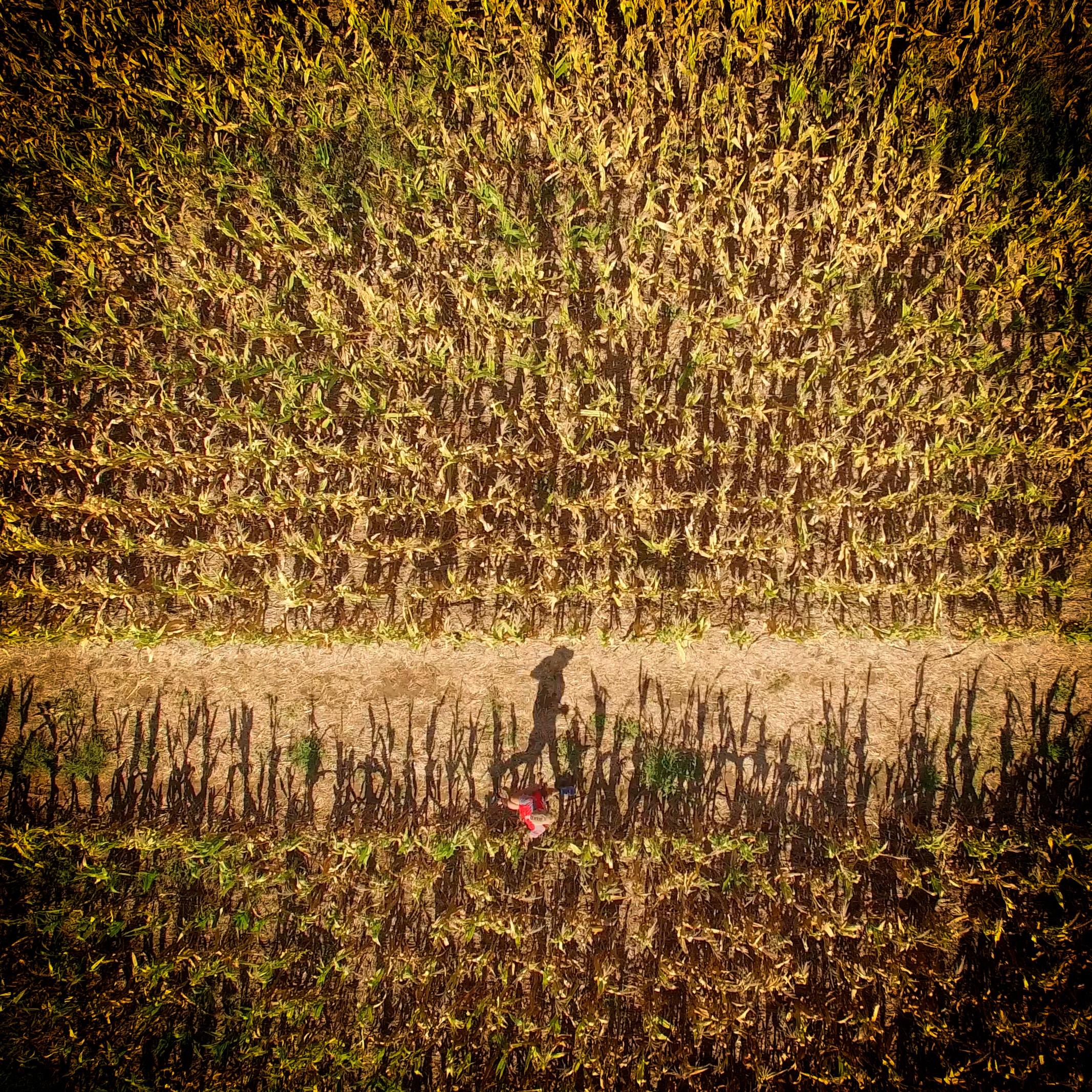 Petani Jagung Bangkit Kembali Setelah Ditipu dan Merugi Miliaran Rupiah