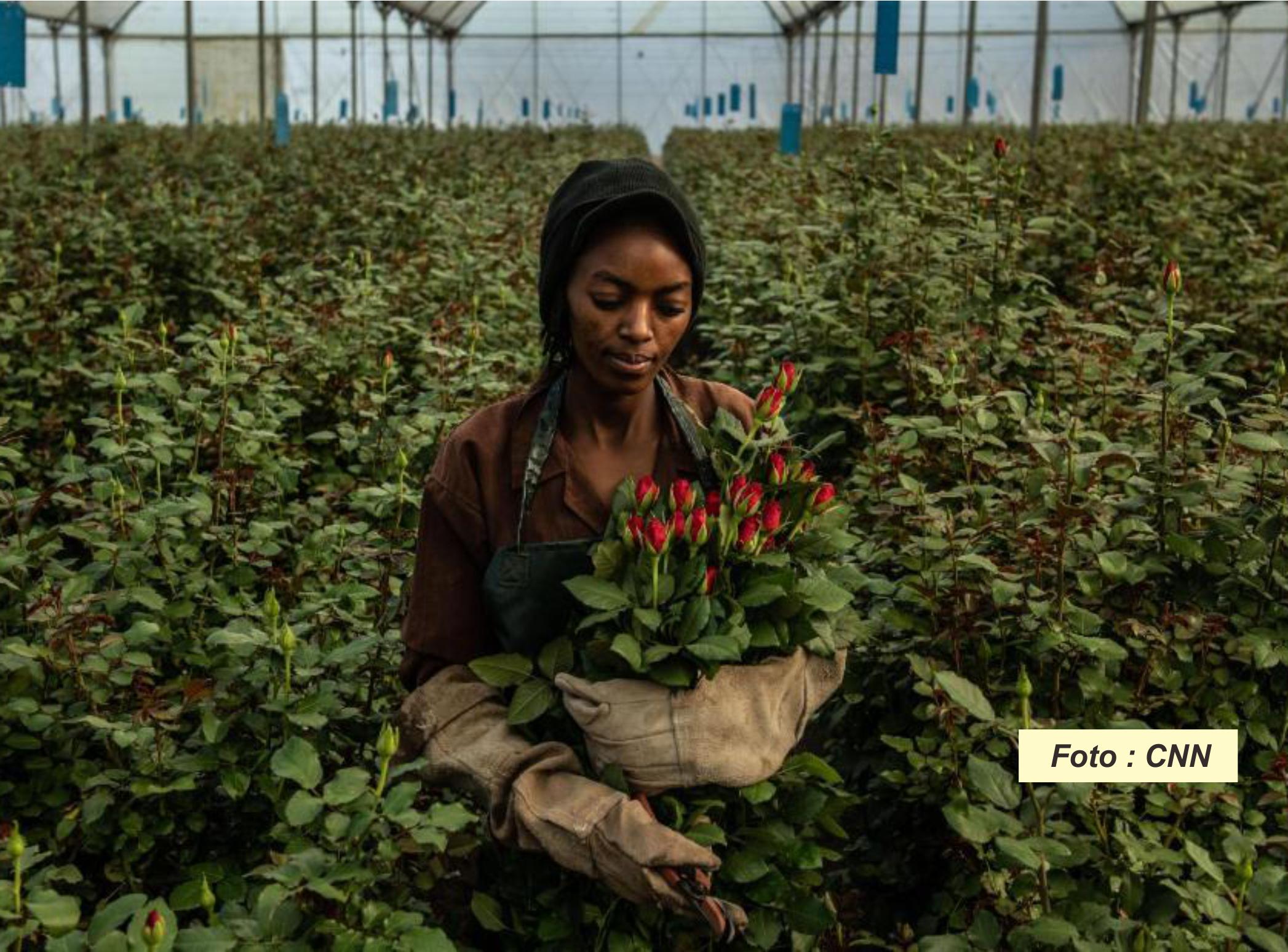 Pertanian dan Kesetaraan Gender