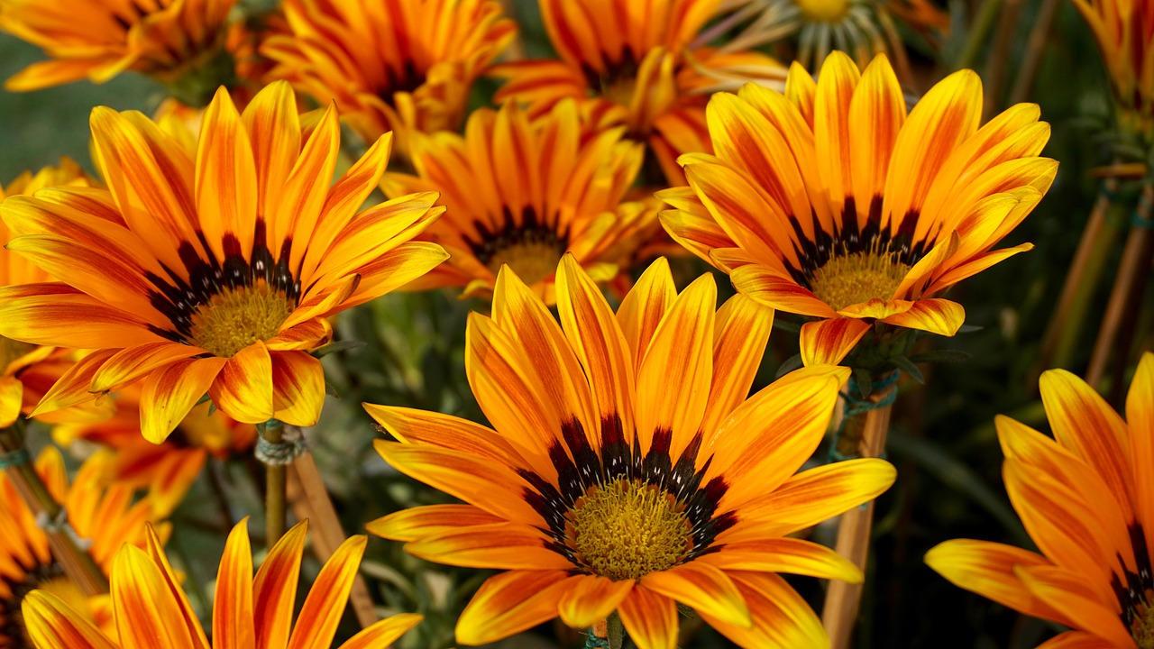 4 Bunga Pengusir Hama Padi yang Alami
