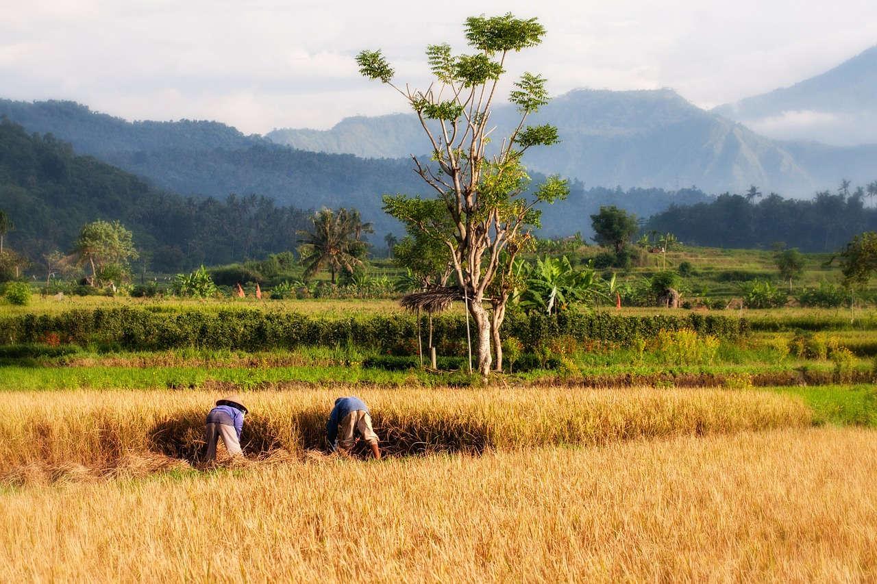 Asuransi Pertanian dibutuhkan oleh petani untuk menghindari kemungkinan kerugian