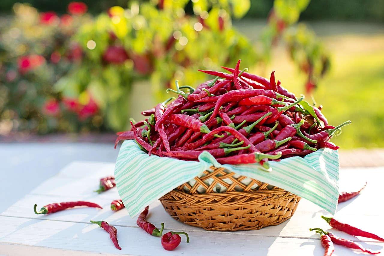 Cabai, Salah Satu Bahan Dapur untuk Sumber Benih Kebun