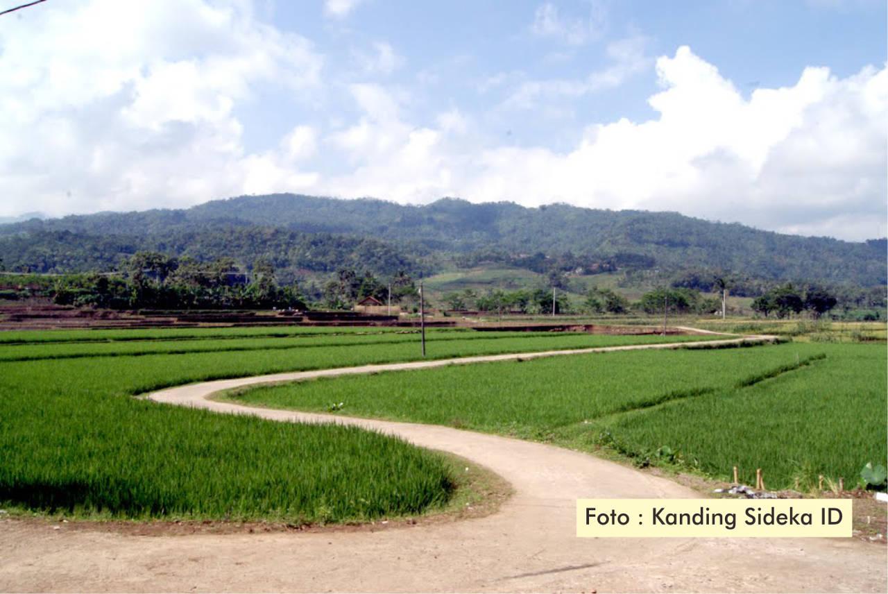 Majukan Pertanian Lewat Pembangunan Jalan Sawah