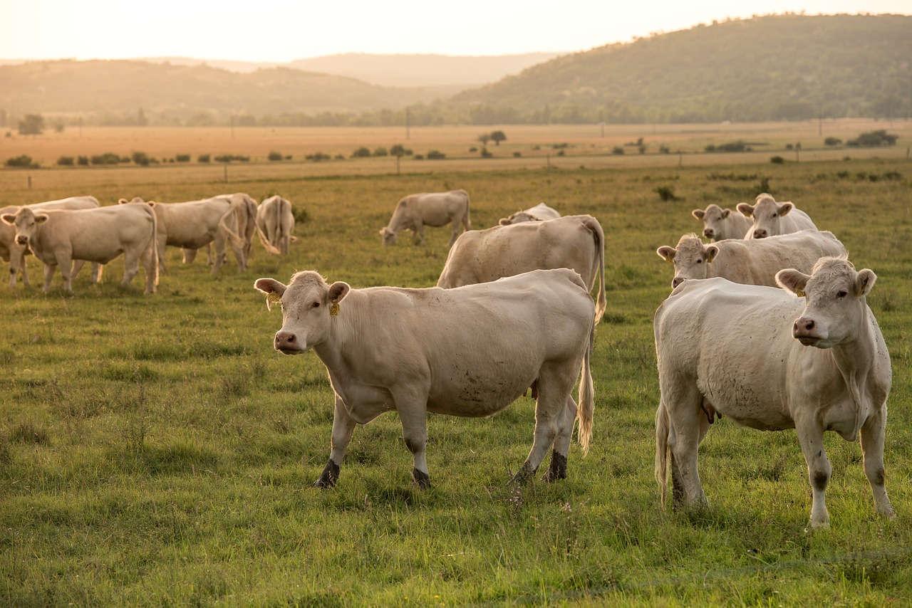 Pupuk kandang biasanya dibuat dari kotoran hewan ternak