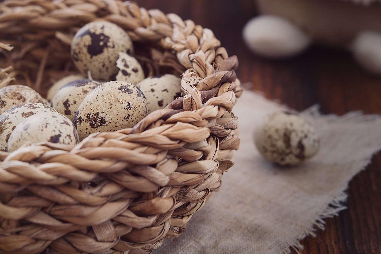 Telur Burung Puyuh