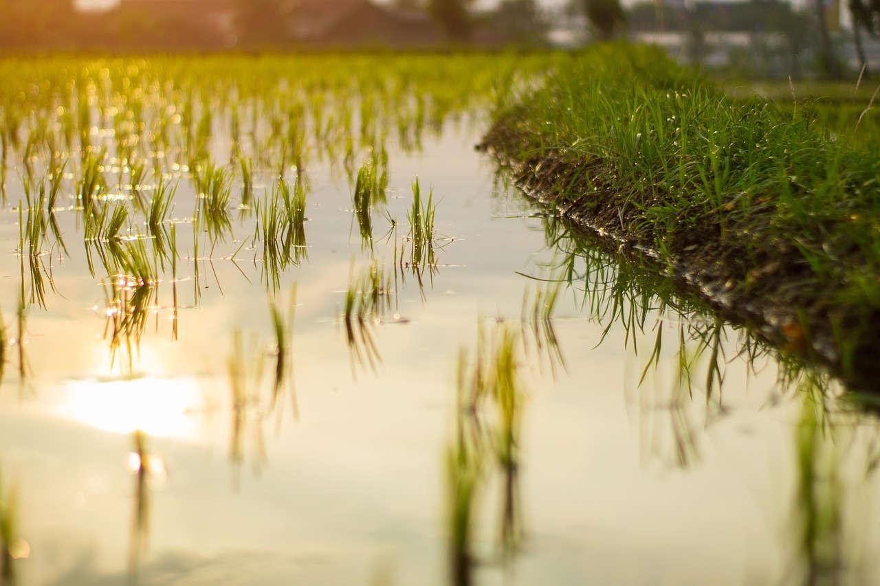 Melihat Prospek Pengembangan Pertanian di Indonesia