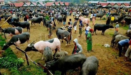 Pasar Kerbau Terbesar di Toraja