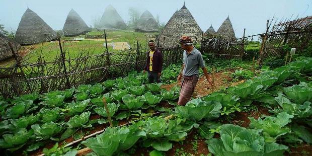 Sistem Eco Farming