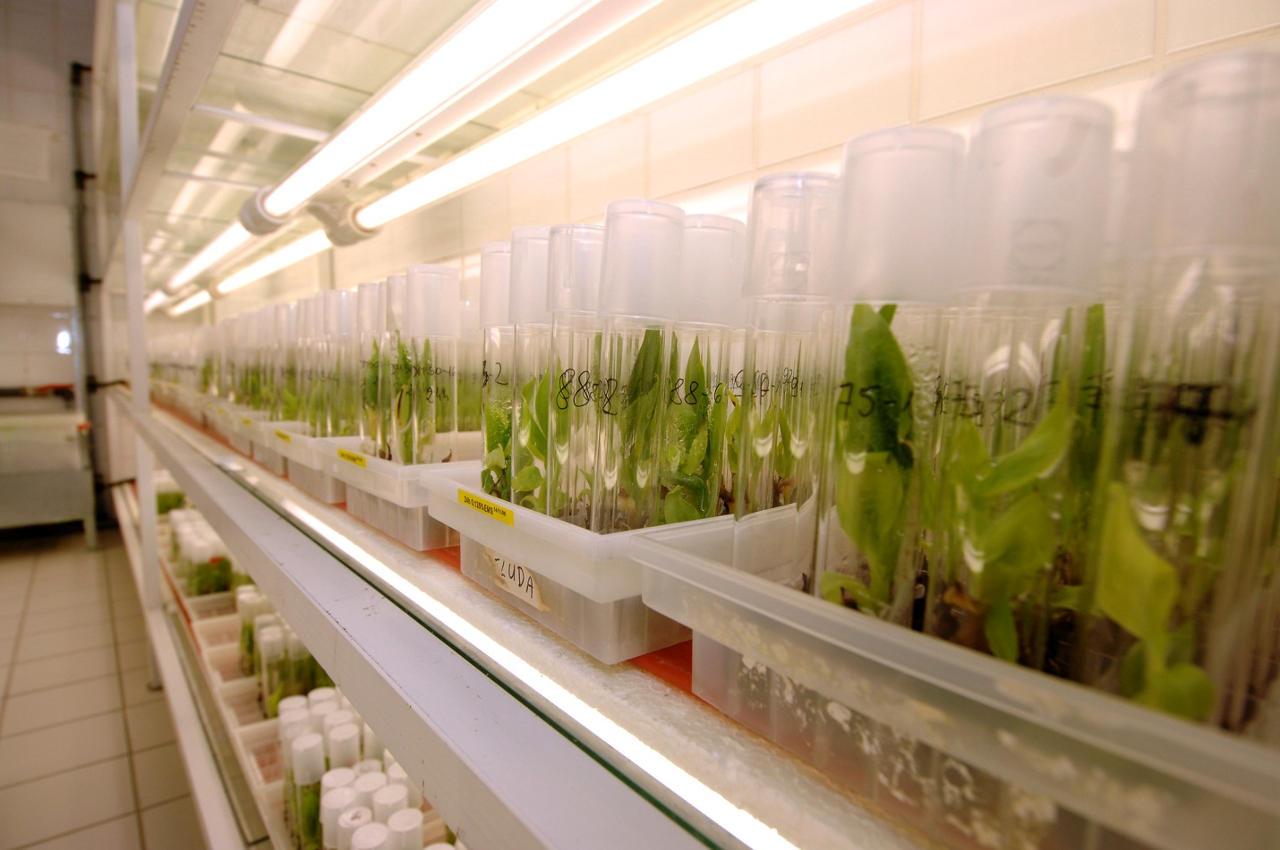 Teknologi Nuklir dalam Pertanian untuk Pemuliaan Tanaman