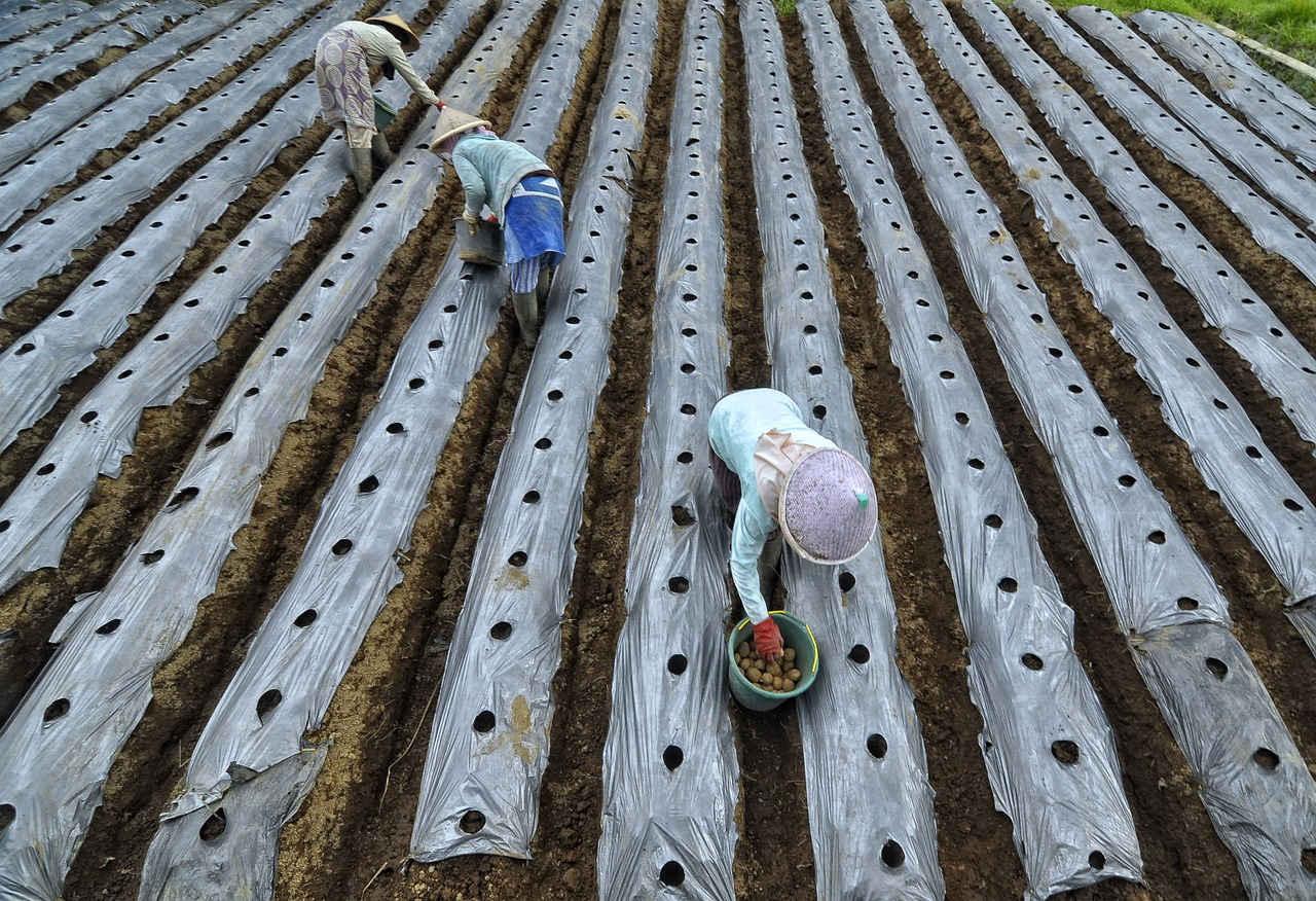 Investasi Pertanian Syariah, Menguntungkan & Memberi Dampak Sosial