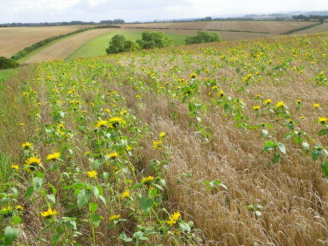 Mengaplikasikan Tanaman Penutup Tanah