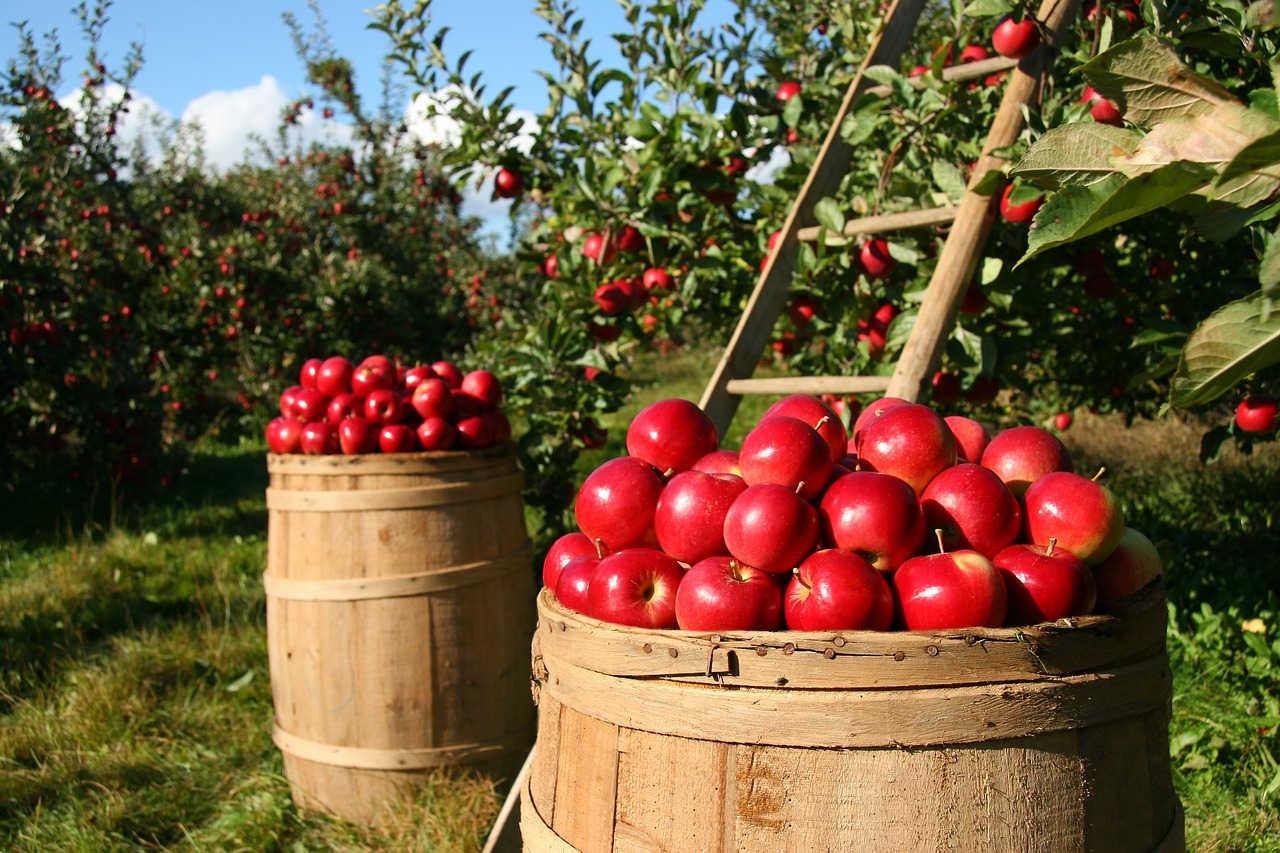 Review Buku Pertanian Organik, Suatu Kajian Sistem Pertanian Terpadu dan Berkelanjutan