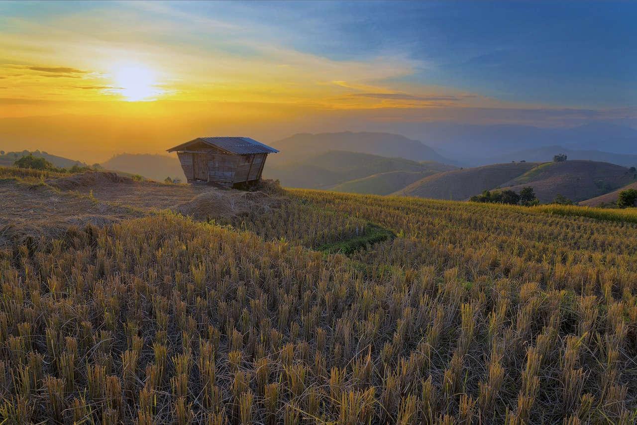 Sawah untuk Bertani