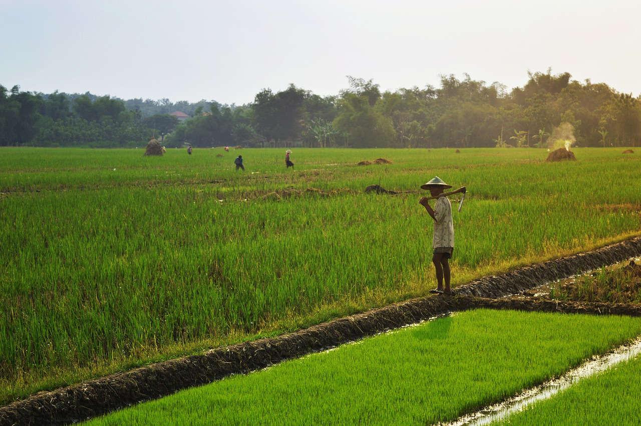 Tantangan Pertanian Organik di Indonesia