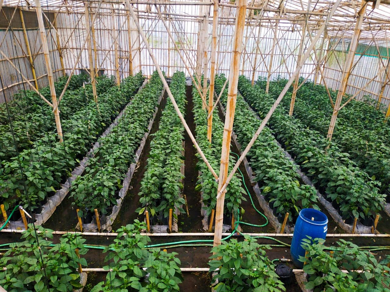 Encomotion Precision Farming