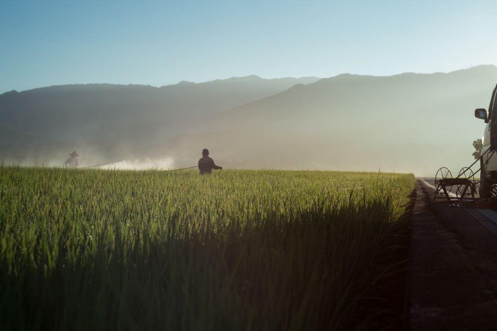 Pestisida palsu dan ilegal