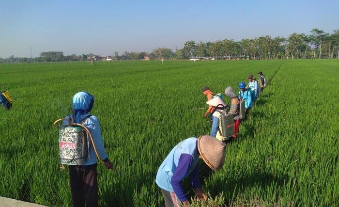 Pestisida Nabati Padi