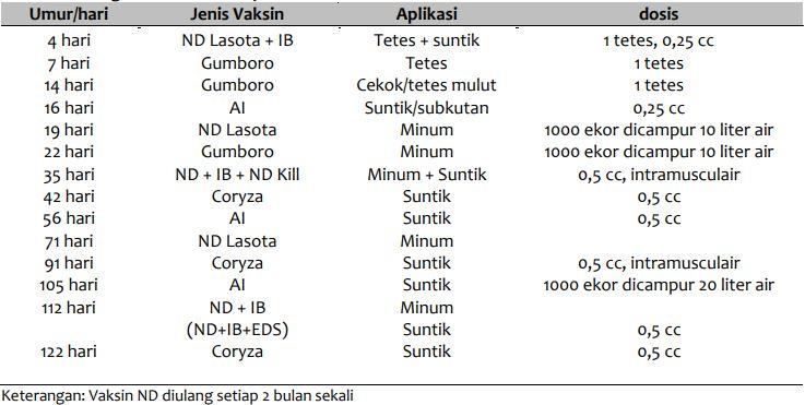 Jadwal Vaksinasi Ayam Petelur