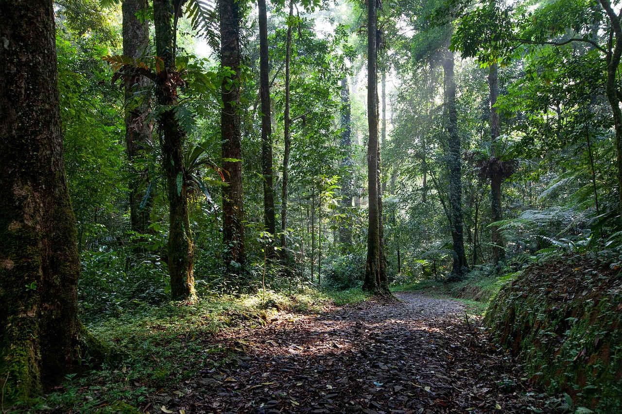 Pelestarian Hutan di Indonesia sebagai Bentuk Pembangunan Berkelanjutan
