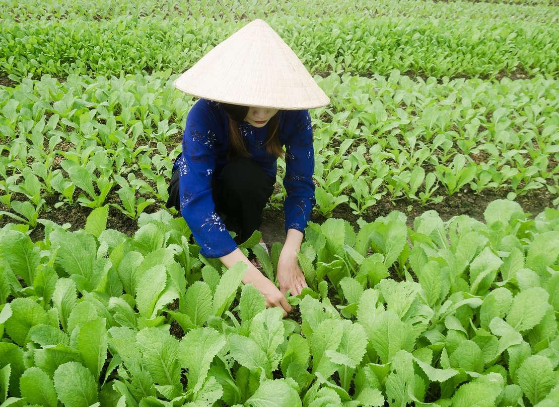 Tips Untuk Dosis Pupuk Padi yang Tepat Bagi Petani
