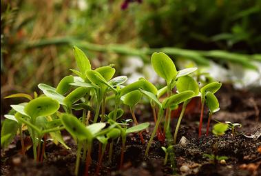 Melaporkan benih rusak dan tidak bermutu
