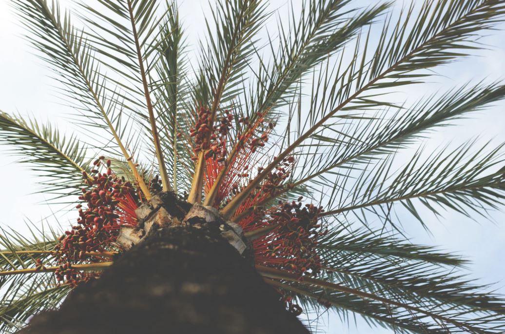 hubungan kelapa sawit dan karhutla