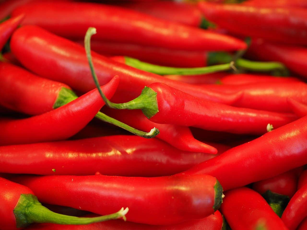 Budidaya Cabe Merah