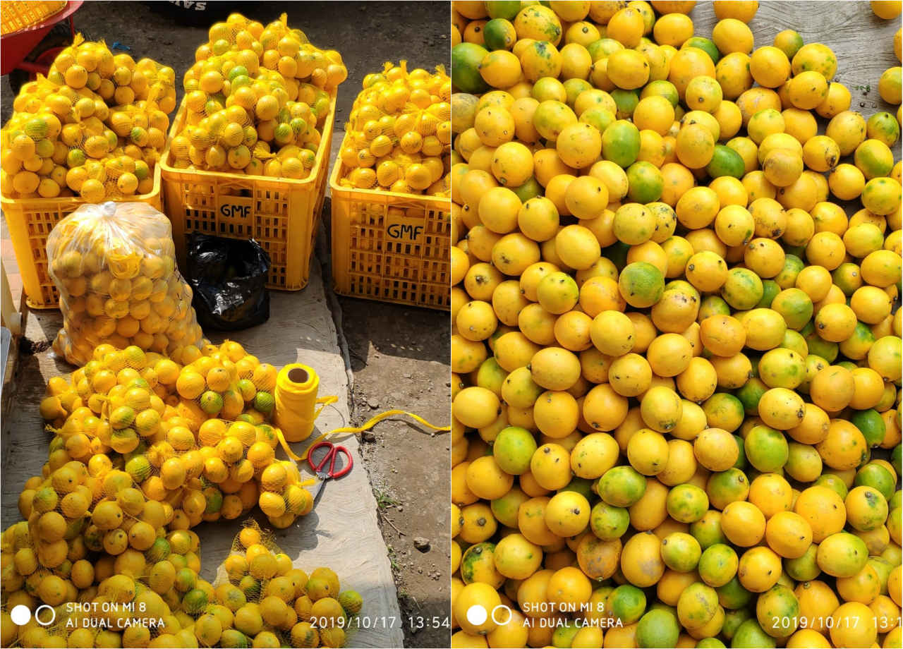 Lemon Padepokan Pandawa Lima
