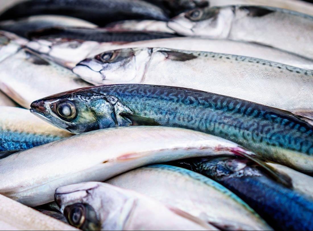 Membuat Kaldu Ikan Menjadi Pupuk Organik