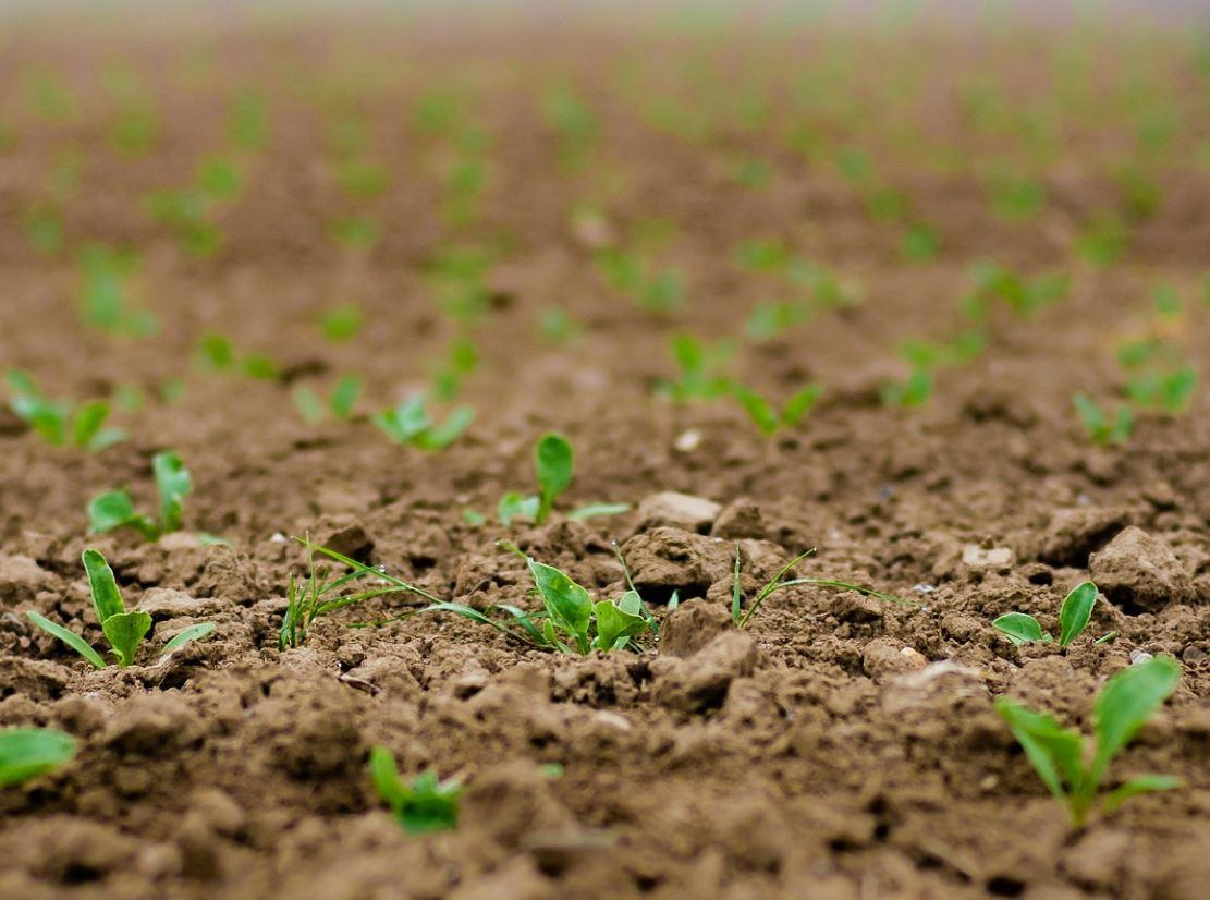 Lemahnya Koordinasi Bibit Pertanian