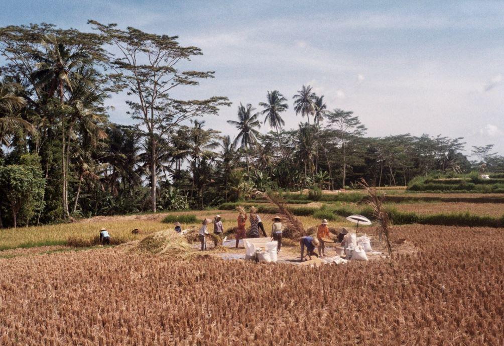 Asuransi Usaha Pertanian
