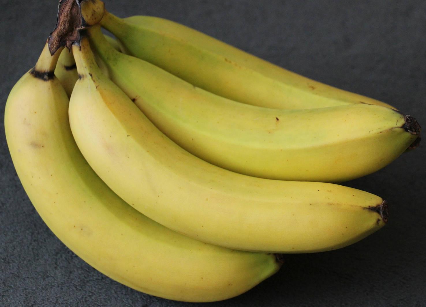 bibit pisang
