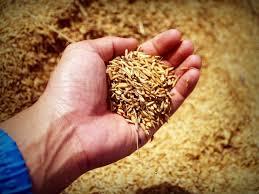 Bibit pertanian