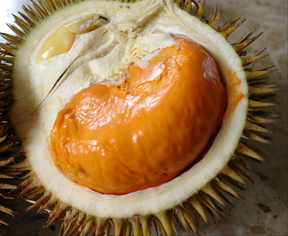 Durian Tembaga