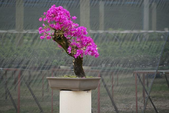Langkah Langkah Membuat Bonsai Bunga Kertas Bagi Pemula
