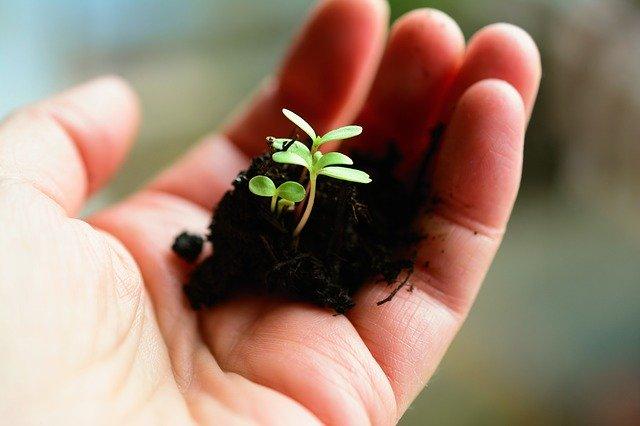 penanaman tanaman langka