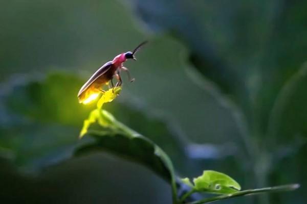 serangga punah