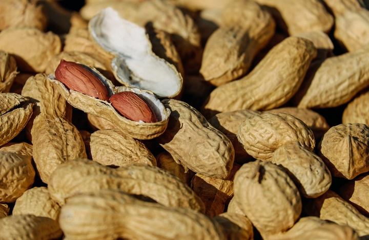 kacang tanah organik