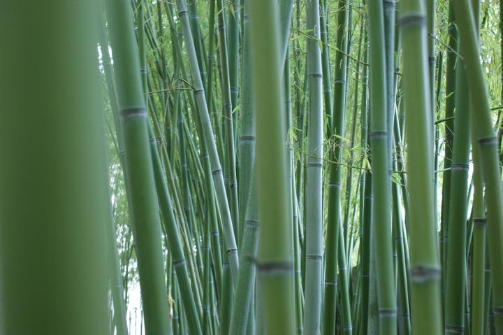 bambu aceh