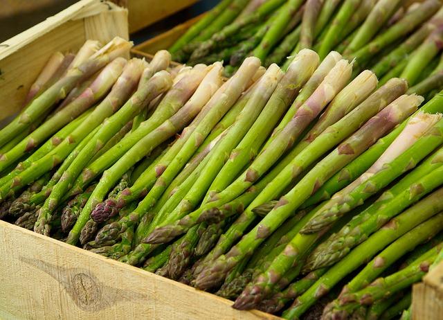 budidaya asparagus