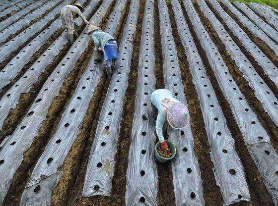 Cara Menjaga Kesehatan Bagi Petani Saat Mewabahnya COVID-19
