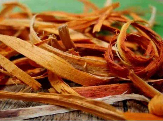 kayu secang