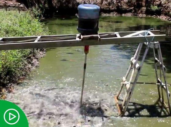 SGDB, Alat Pemberi Pakan Ikan Otomatis Sederhana