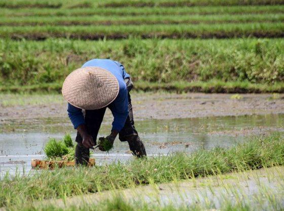 Sektor Pertanian Perlu Dipikirkan Dalam Penanganan Covid-19