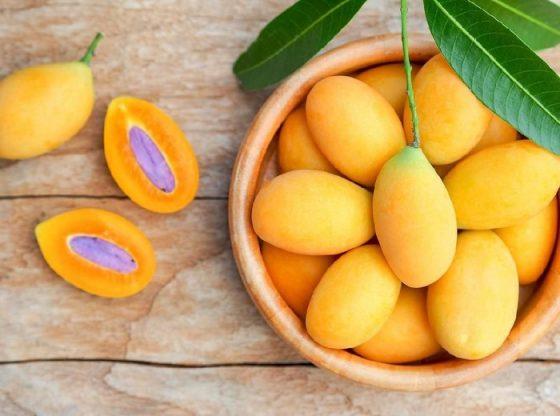budidaya buah gandaria