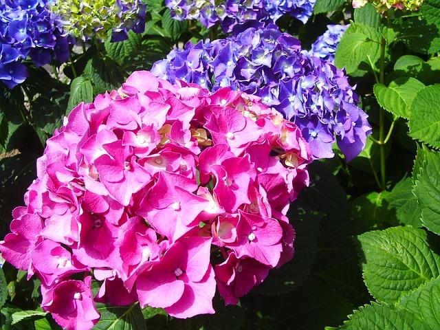 bunga panca warna