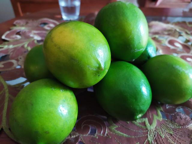 jeruk lemon california