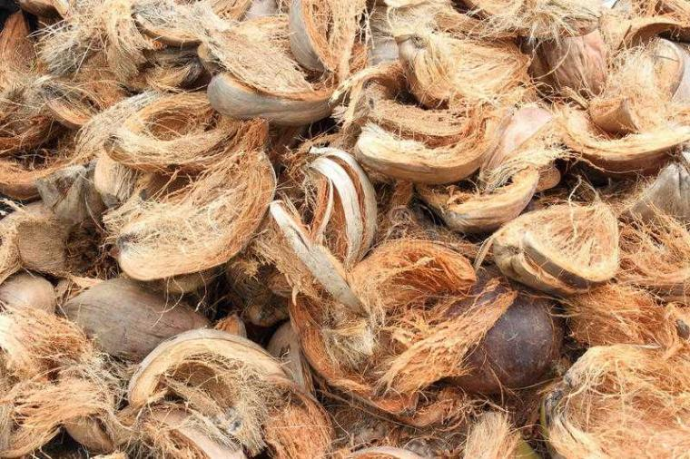 sabuk kelapa membuat pupuk KCL